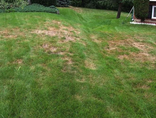 Le gazon semer ou tourber page 4 construction - Semer une pelouse ...